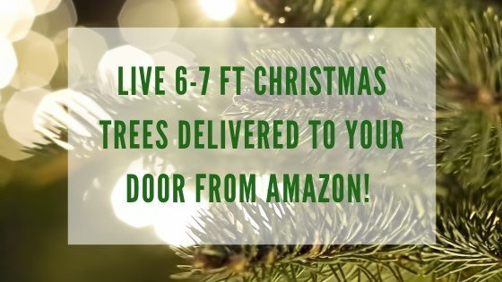 Christmas Tree deliveries now through Amazon!