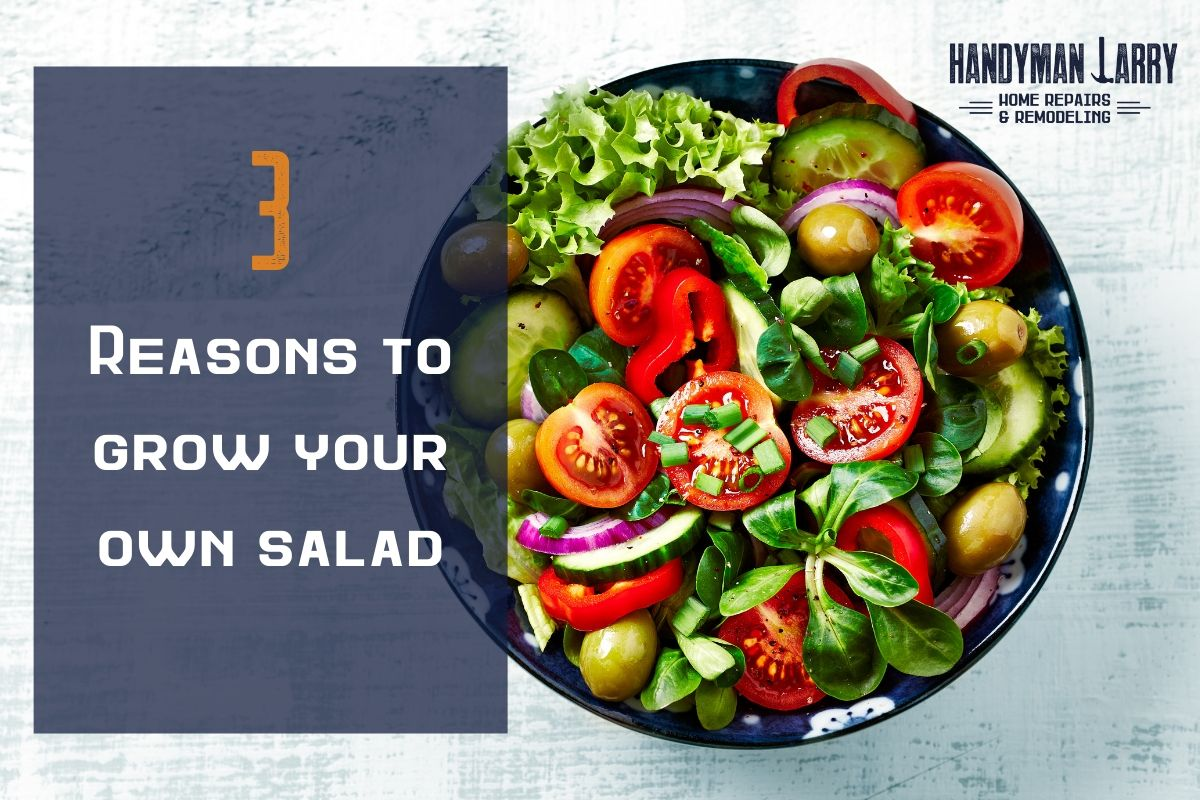 3 Reasons To Grow Your Own Salad