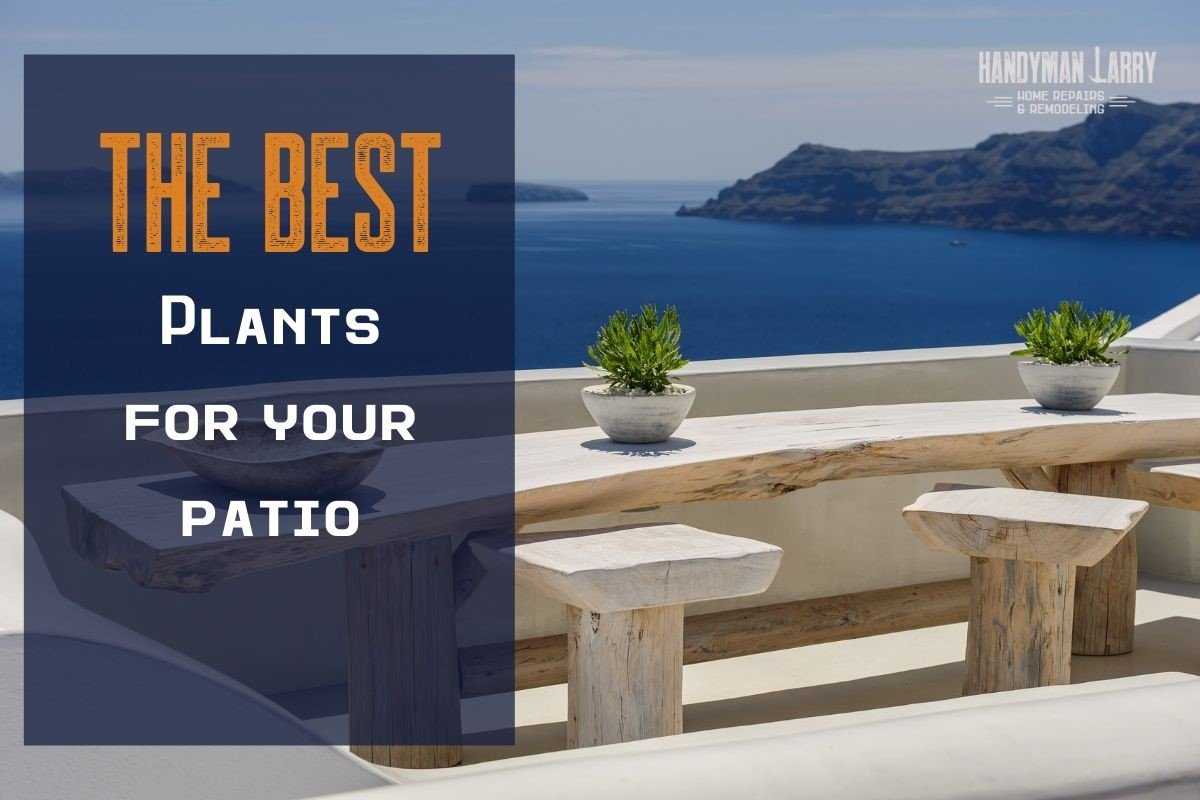 The Best Patio Plants For Your Patio
