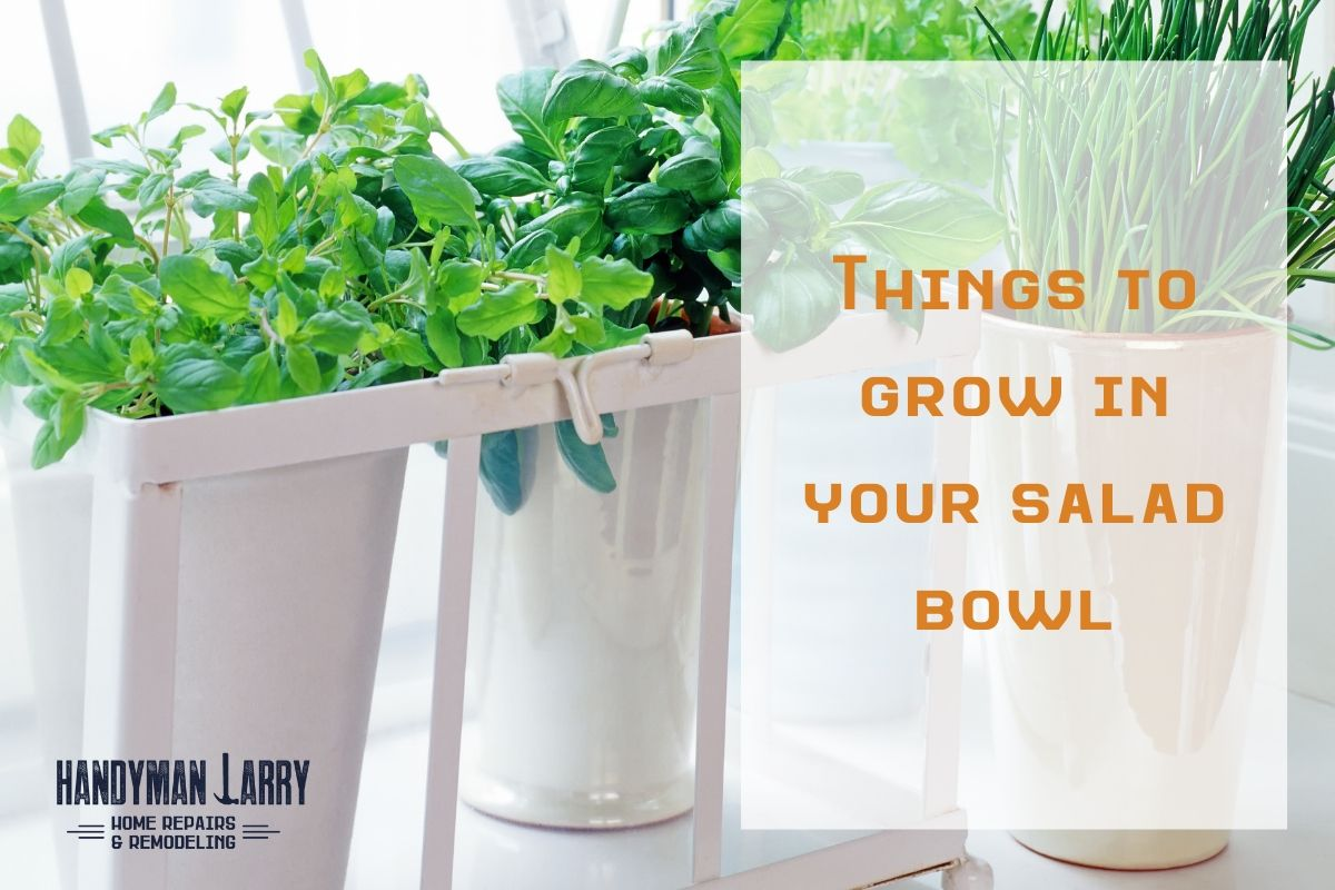 Things to grow indoors in your salad bowl