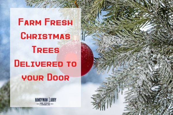 Fresh Christmas Tree Delivery