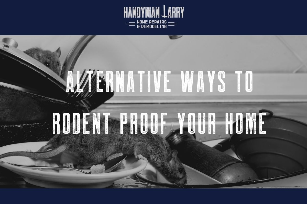 Alternative ways to rodent proof your home